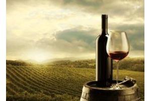 Putování za víny z Moravy a Čech