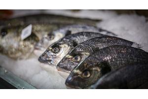 Ryby a techniky jejich zpracování