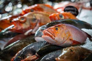 Techniky zpracování ryb